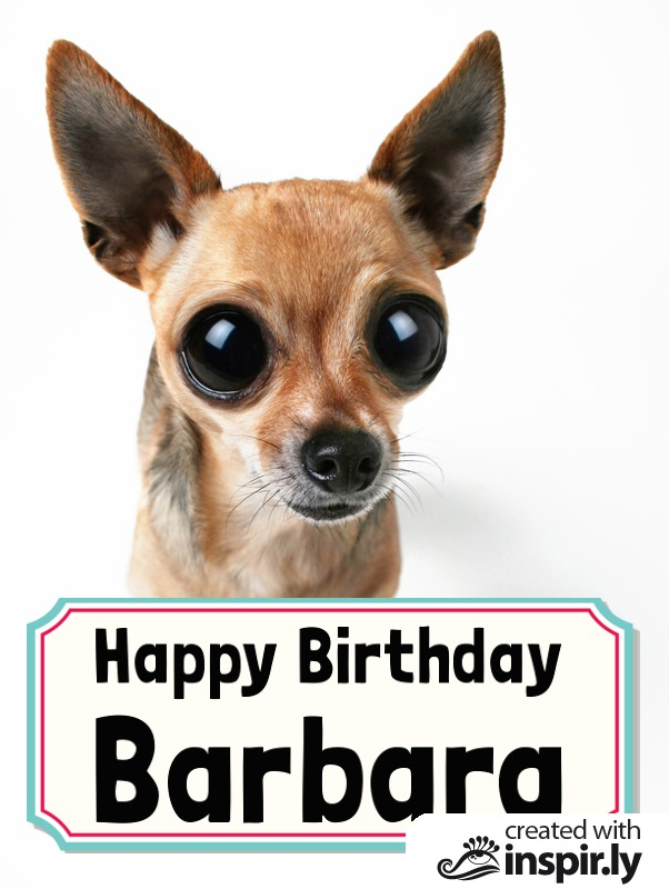 Happy Birthday Chihuahua-235304